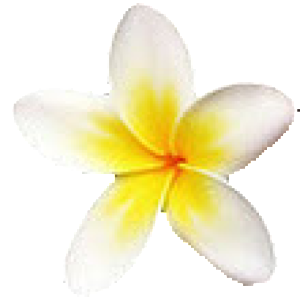 cropped-plumeria1.png